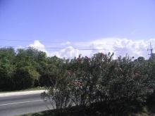 エクセルマクロ達人養成塾塾長ブログ-道路の中央分離帯に咲く花。